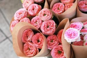 20626398_s - flowers